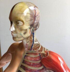 printed scheleton